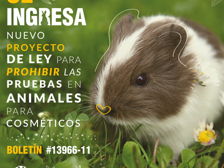 Ingresa al congreso nuevo proyecto de ley que busca prohibir el testeo animal en cosmética en Chile