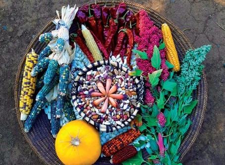 Libro: Reconocimiento y descripción de las semillas tradicionales de las comunidades mapuches