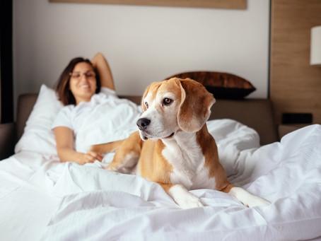 Hard Rock Hotels All Inclusive presentan su nuevo programa de residencia Pet Friendly