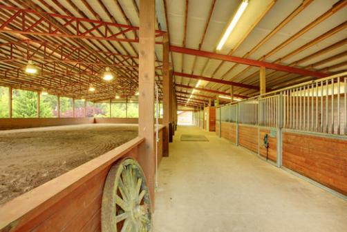 arena 6.png