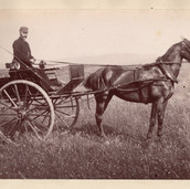 1181 Horse and Cart
