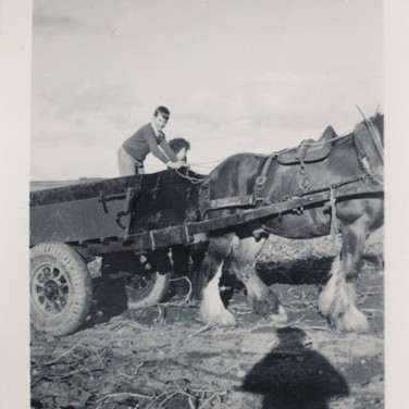 828 Horse with Cart
