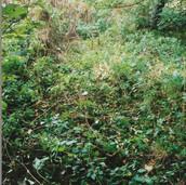501 Mill of Ogilvie 2005
