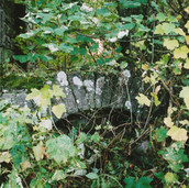 504 Mill of Ogilvie 2005