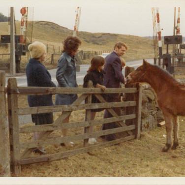 591 Feeding Ponies.jpg