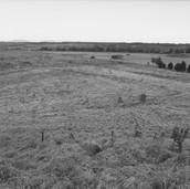 474 Mill of Ogilvie 2005