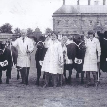 258 Netherton Cattle