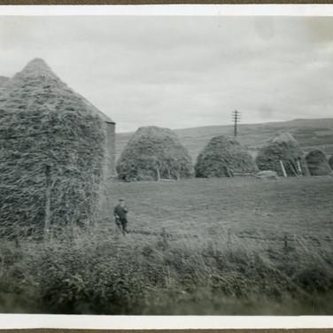 931 Mr Sharp's Harvest 1942
