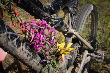 NEW bike flowers.jpg