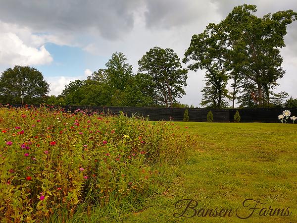 bansen farms flowers.png