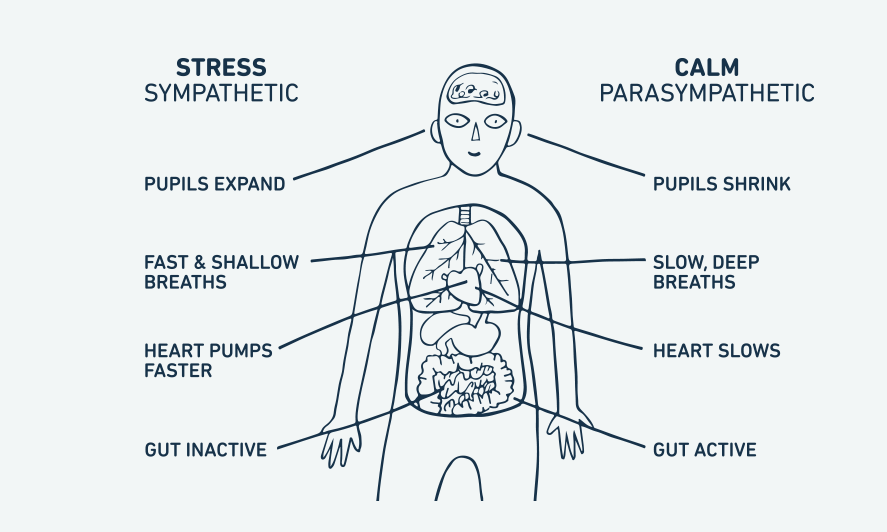 Learn to Calm the Nervous System with EFT