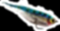 Streamer truite PPS