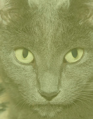 mousetrap image vertical.jpg