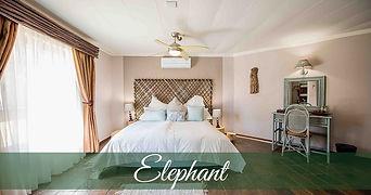 elephant-1140x600.jpg