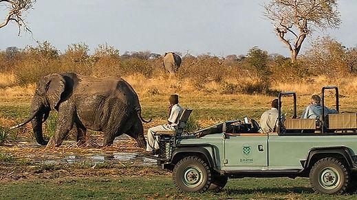 safari_elephant_edited.jpg