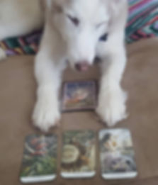 lakota looking at cards.jpg