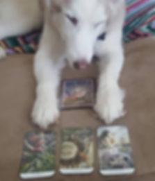 lakota looking at cards.jpg
