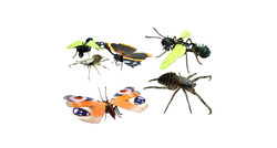 Bespoke designed insects for museums and schools. logo design services online