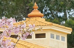 Golden kalash atop the gold tiled roof of the main building with cherry blossoms in foreground.