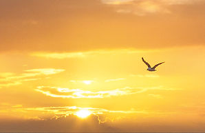 A lone segull flies across the sky at sunrise.
