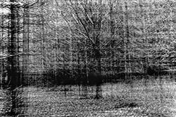Wald - Mehrfachbelichtung