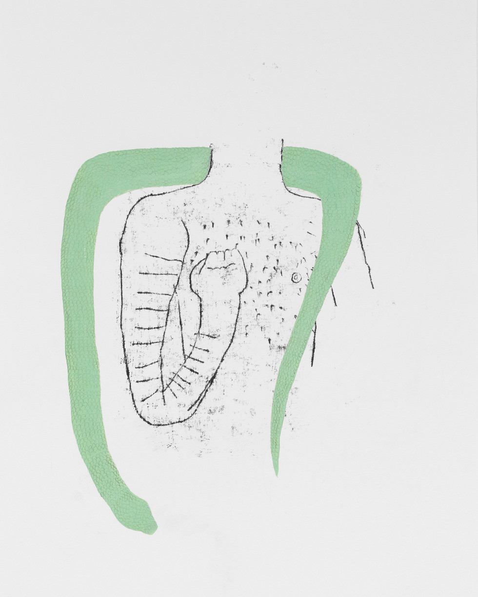 du ich anatomia