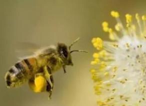 ▶ 團隊合作,各盡其職——蜜蜂 ◀