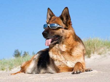 How To Help Your Dog Through The Hot Weather