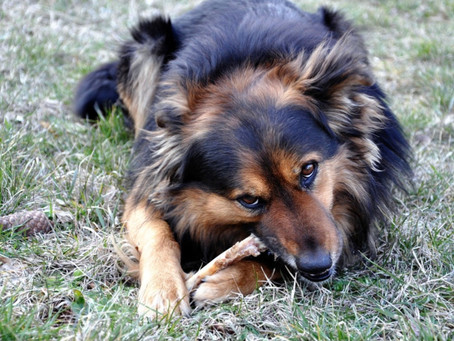 Enrichment for dogs? What is it and why do we need it?