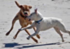 urban pets problème chien