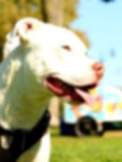 urban pets comportement canine