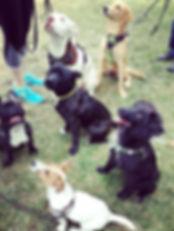 urban pets éducation canine