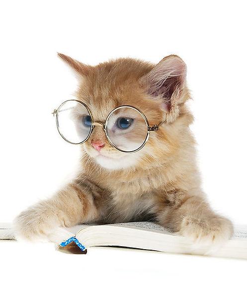 chat qui lit.jpg