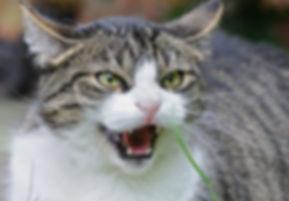 urban pets problème chat