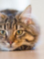 urban pets problème comportement chat