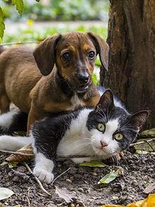 urban pets problème chat chien
