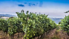 Descubra os Vinhos do Dão
