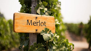 Merlot, a maciez que conquista