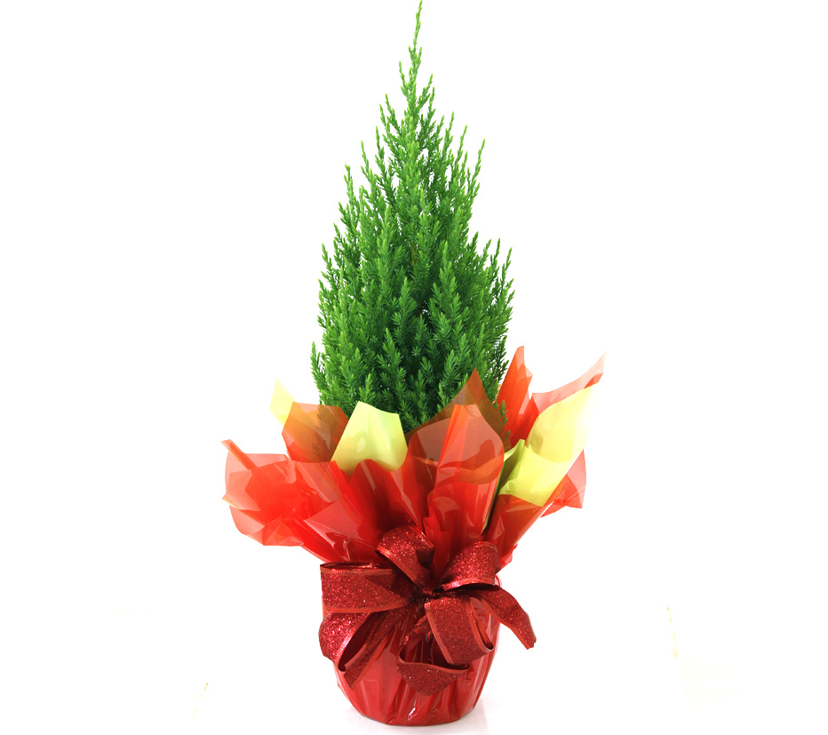 arvore-de-natal-natural-decorada