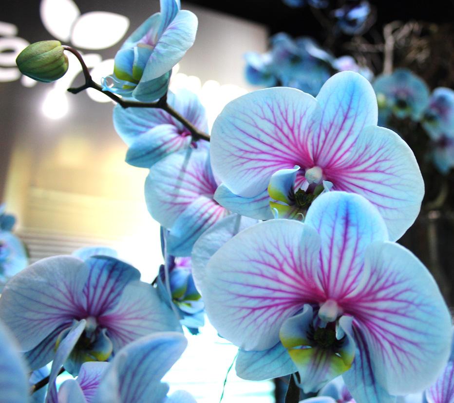 Orquidea-Enflor