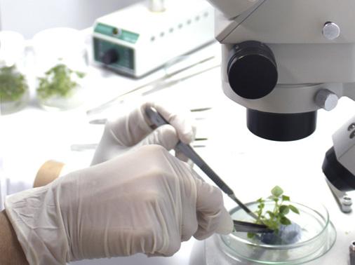 laboratorio-batata