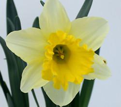 Narciso-Terra-Viva-2