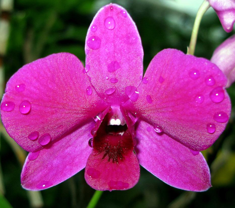 orquidea-terra-viva