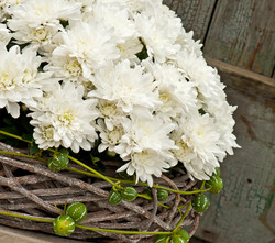 crisantemo-branco