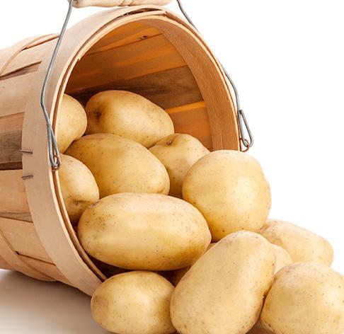 Batata para Mercado