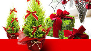 Especial de Natal Terra Viva