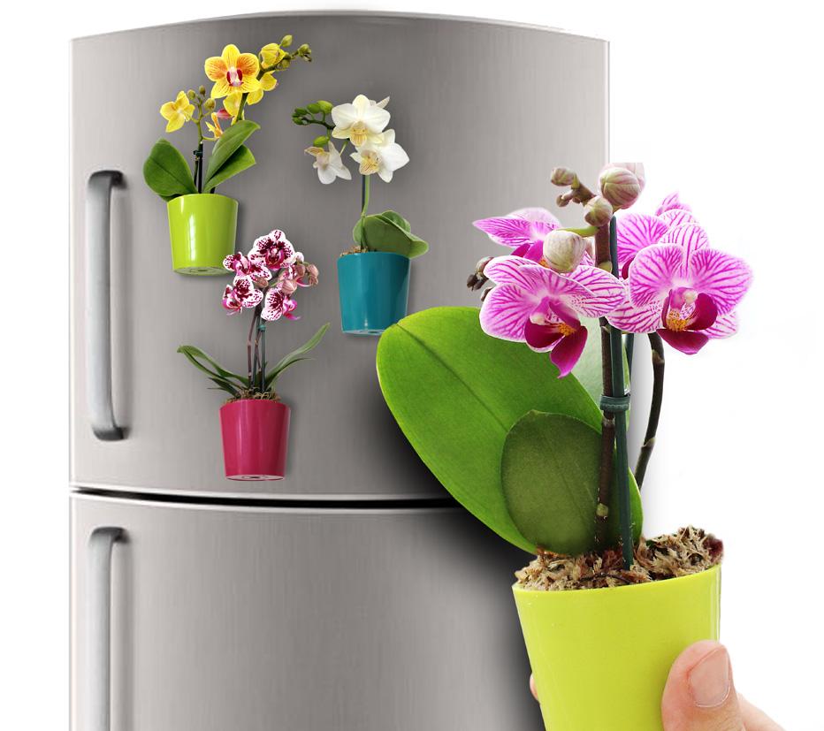 flor-na-geladeira