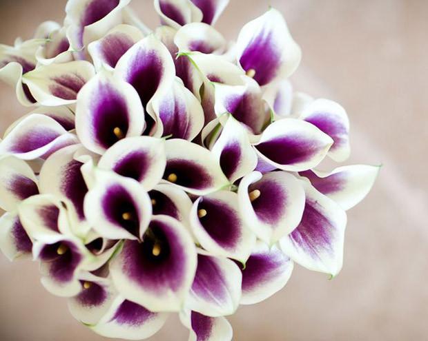 Bouquets de Calla