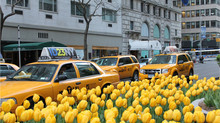 As lindas Tulipas em New York!