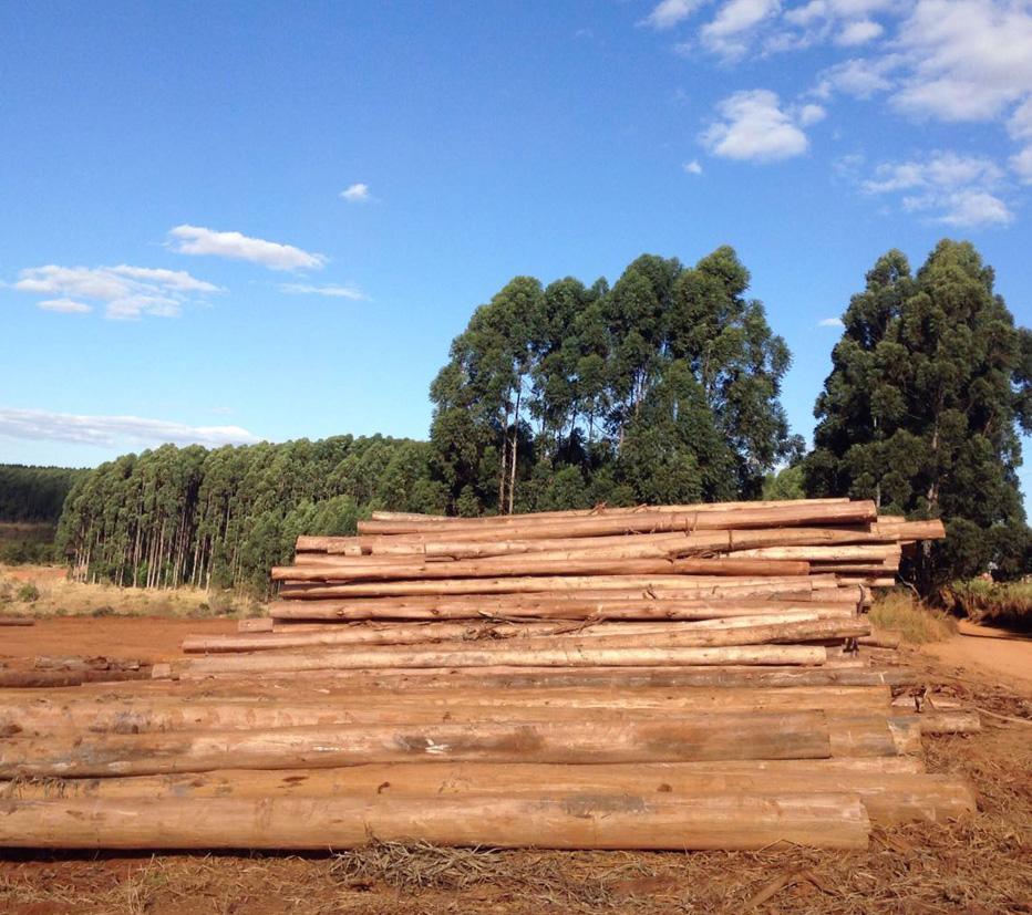 madeiras-de-eucalipto